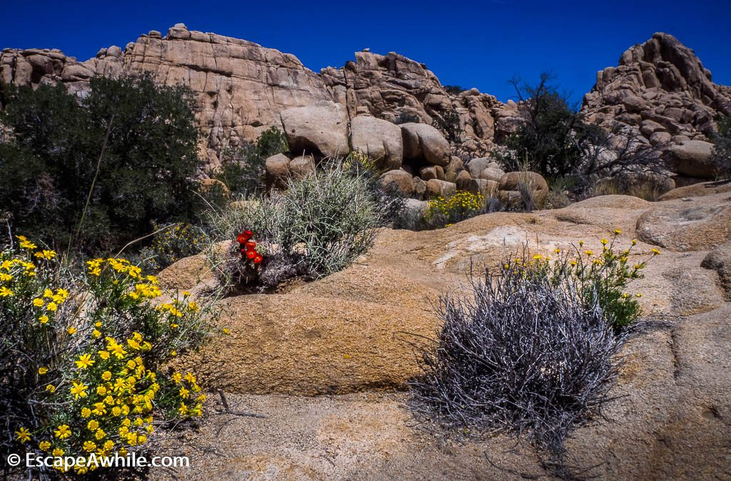 Spring time is a great time to enjoy wildflowers in the park.