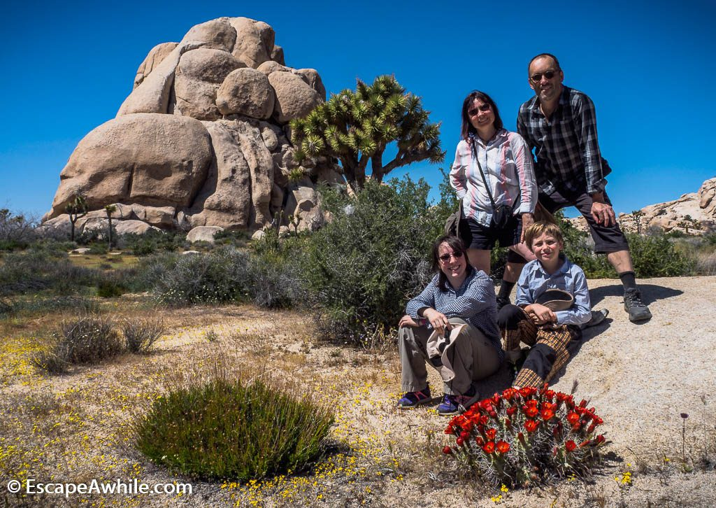Family pic which sums up our national park experience:  granite rock boulders, Joshua Trees and a carpet of spring wild flowers.