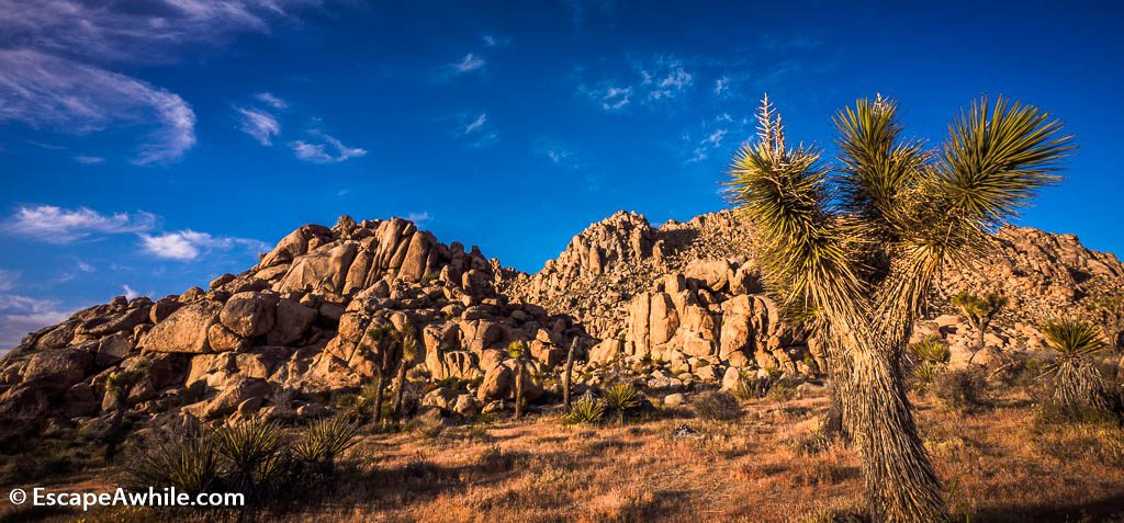 Signature views of the yuccas and boulders, Joshua Tree national park.