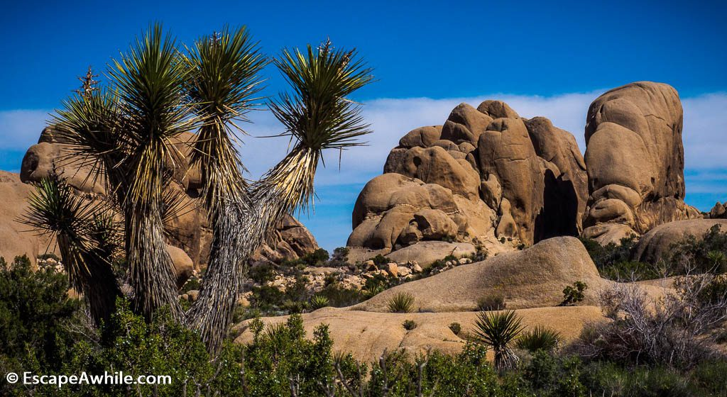 Another clasic view in the Joshua Tree NP.