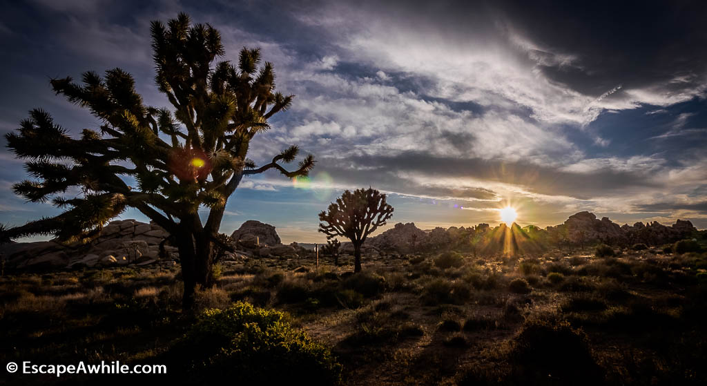 One of the classic Joshua Tree kitch sunsets.