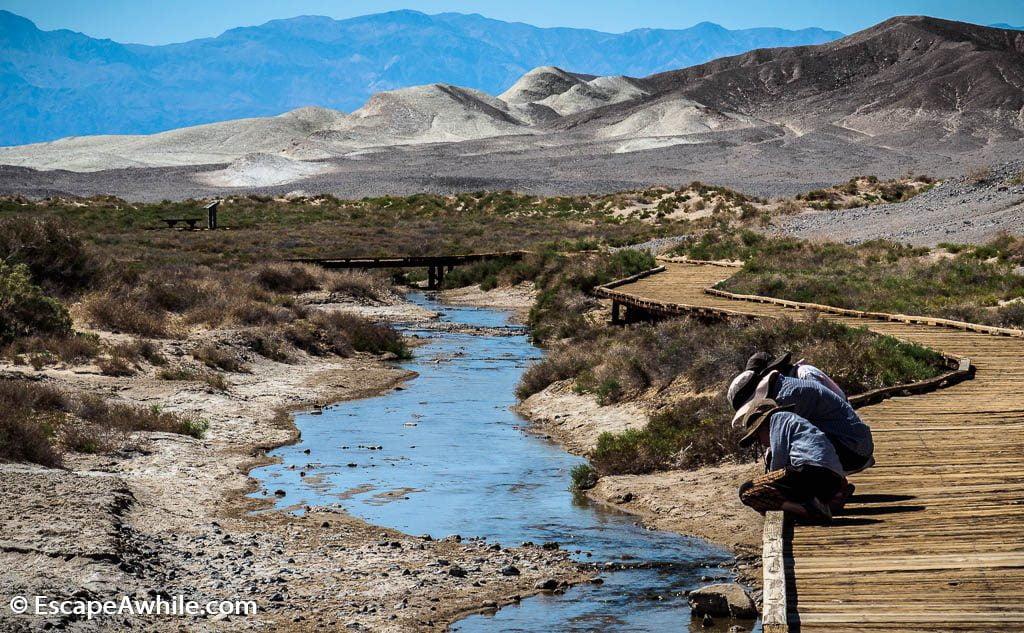 Salt Creek boardwalk - a desert creek with unique pupfish species.