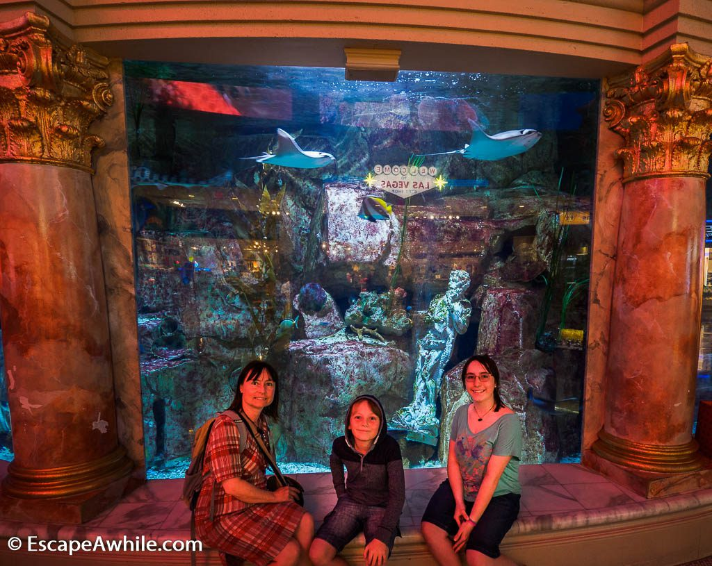 Salt water aquarium at Caesar Forum shops, Las Vegas