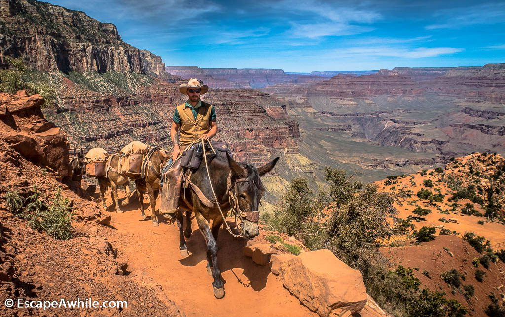 Pack mules in the Grand Canyon, South Kaibab Trail, South Rim, Grand Canyon, Arizona, USA