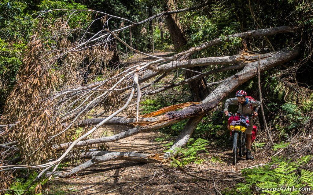 First challenge - fallen tree