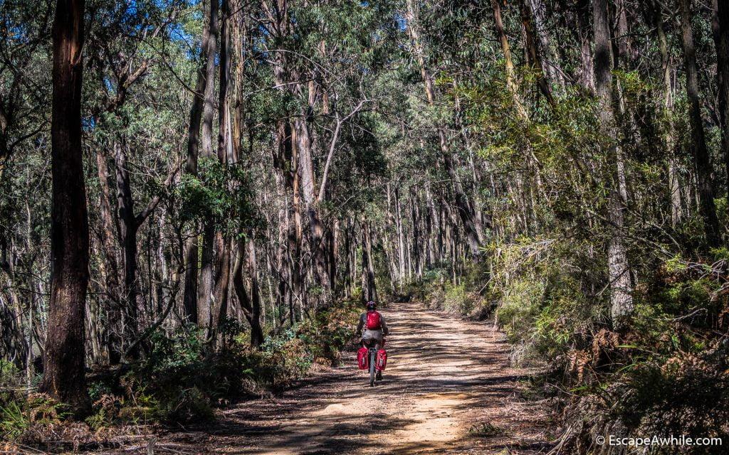 Muloon fire trail through Talaganda Forest
