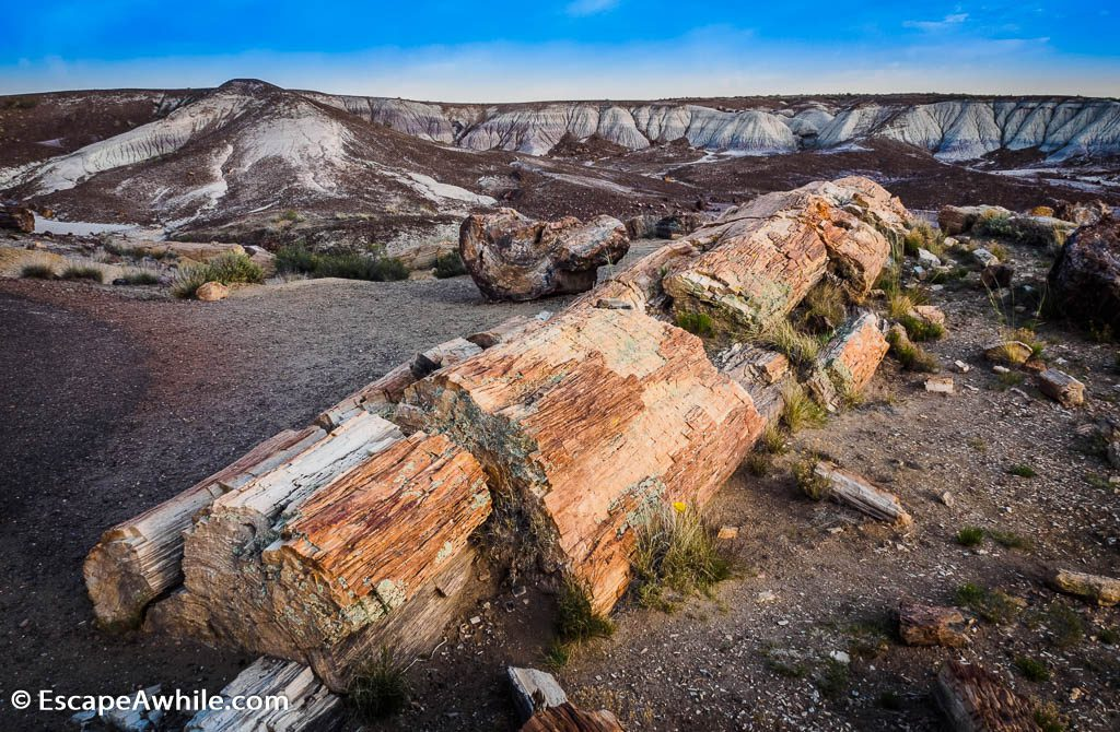 'Rock wood' along the Crystal Forest walk in Petrified Forest National Park