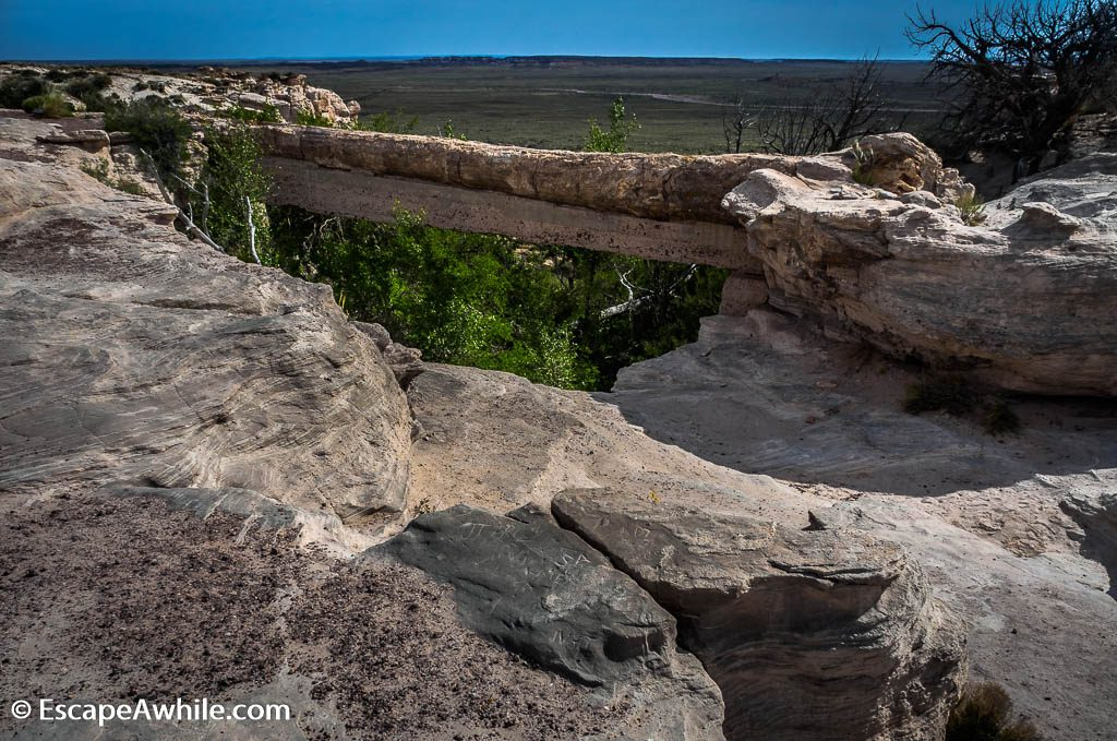 Agate Bridge, 110ft/34m long petrified log, spanning a gully.